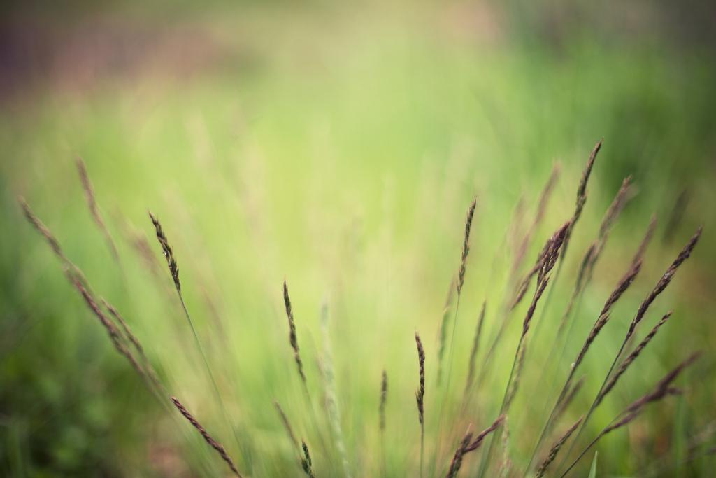 Черкассы Сеятели Семени